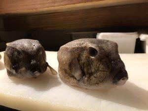 五島産箱河豚